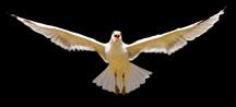 Bird 3x1.361