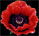 Poppy .5x.536-72